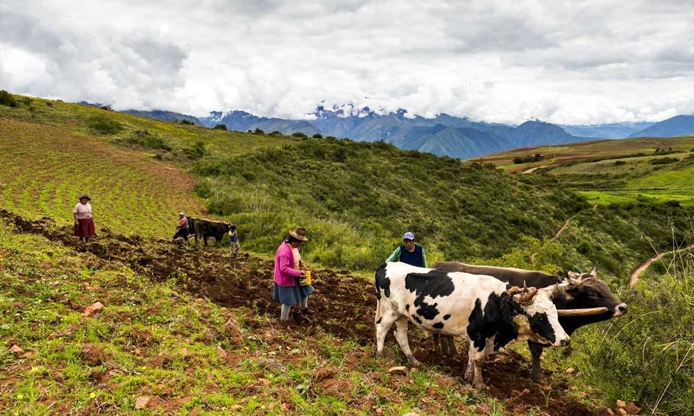INEI: Producción del subsector pecuario cayó 0.78% en febrero