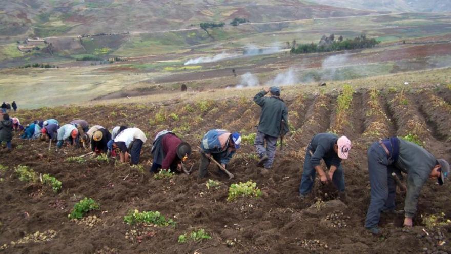 LEY DE PROMOCIÓN AGRARIA DEBE INCORPORAR PEQUEÑA AGRICULTURA Y FOMENTAR ASOCIATIVIDAD EN EL CAMPO
