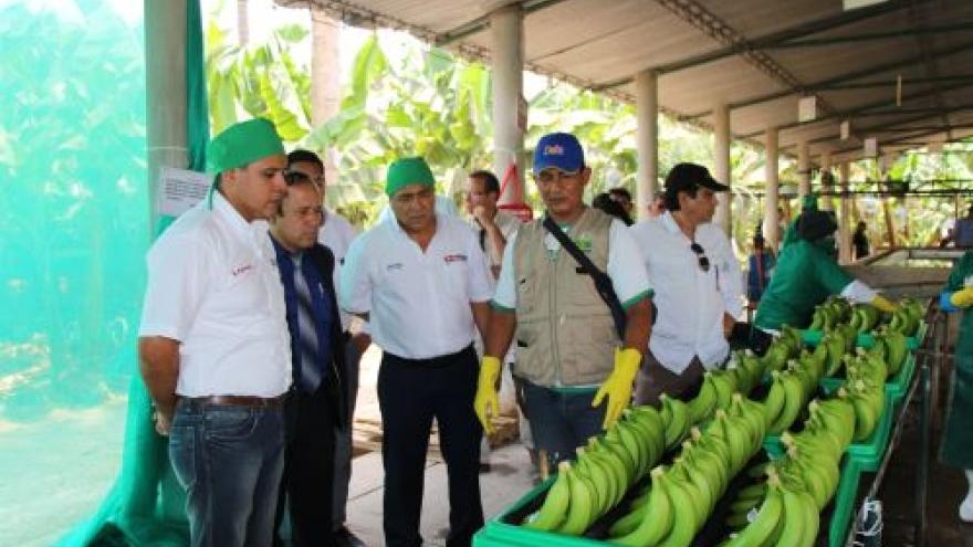 PIURA: PRODUCTORES DE BANANO ORGÁNICO RECIBEN CERTIFICACIÓN DE CARBONO NEUTRAL