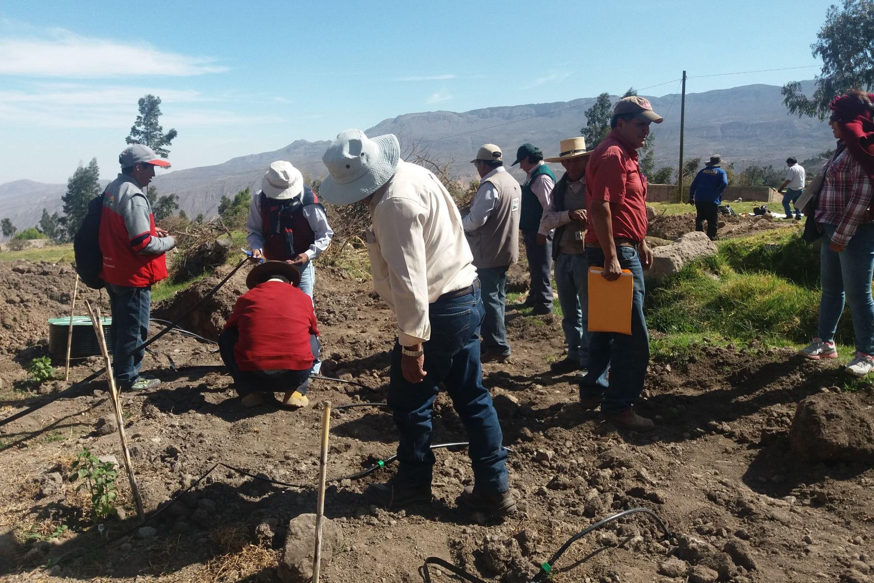 AREQUIPA: AGRICULTORES SE PREPARAN PARA MITIGAR IMPACTO DEL CAMBIO CLIMÁTICO