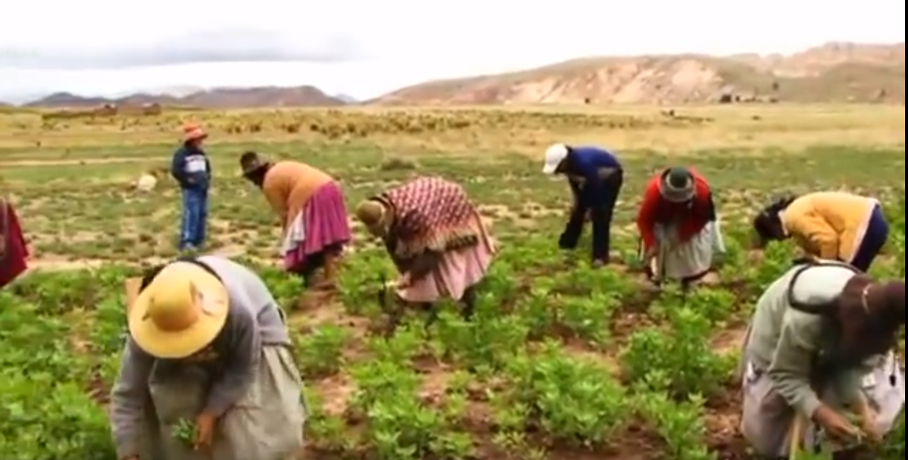 La Pequeña Agricultura y la Gastronomia en el Perú