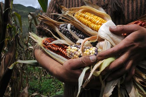 Países de la CAN acuerdan impulsar agenda para la reactivación agropecuaria